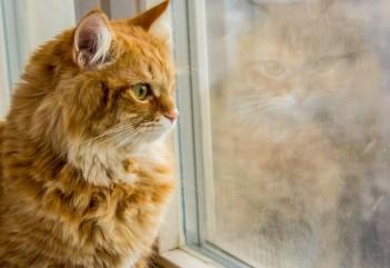 Кошки и окна