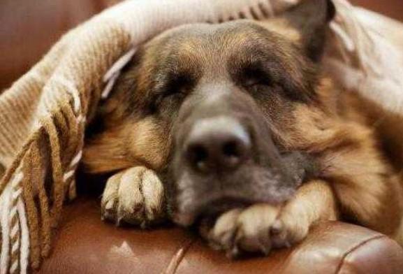6 Способов Обеспечить Собаке Счастливую Старость