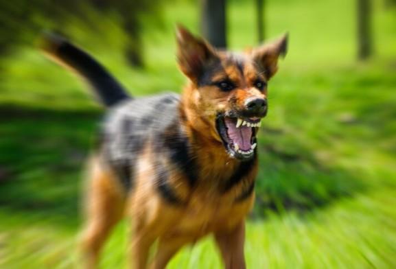Агрессия собак. С чем связана? Как бороться?