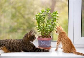11 растений, опасных для кошек
